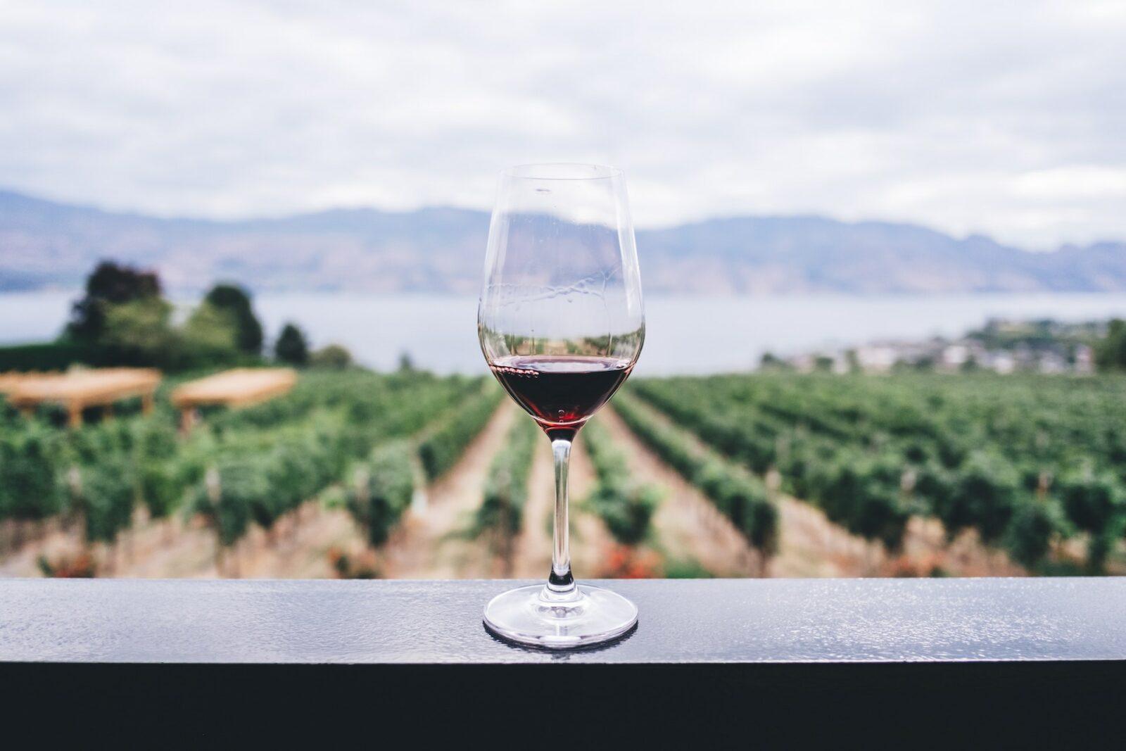Wina ekologiczne - czym różnią się od win konwencjonalnych?